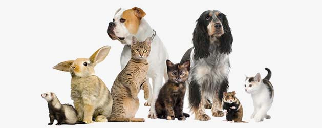 pets as therapists picture
